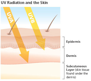 UVA and UVB Penetrating Different Skin Layers